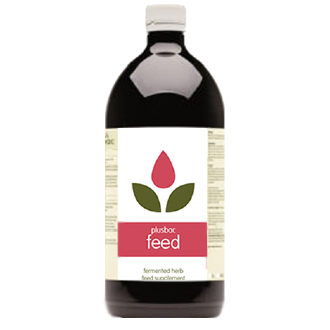 Plusbac Feed